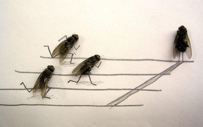 moscas-corren