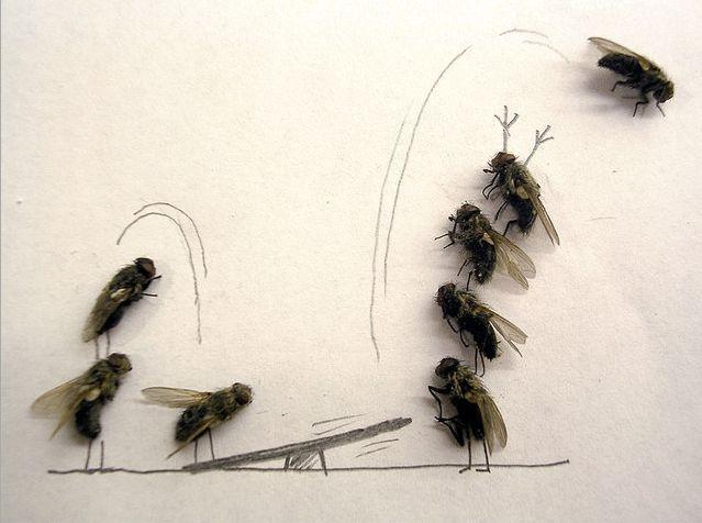 moscas-juego