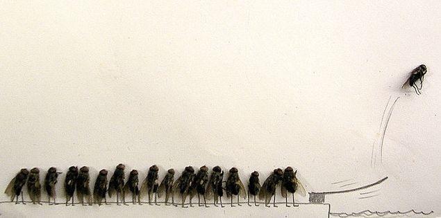moscas-pileta