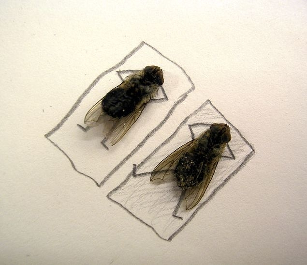 moscas-plata