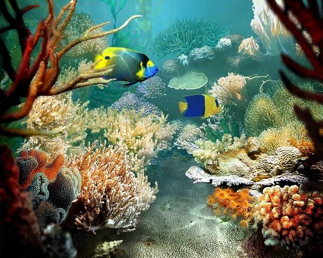 Fondos de pantalla de arrecifes de coral
