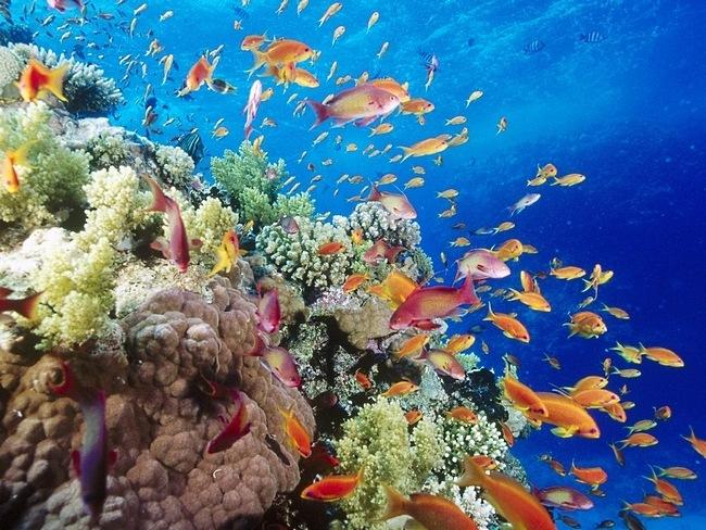 Wallpapers de arrecifes de coral