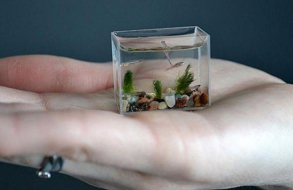 el acuario minúsculo