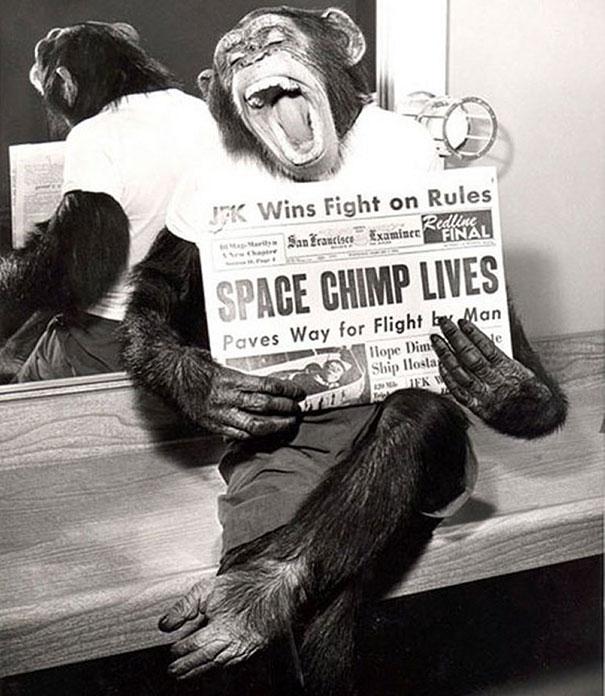 Chimpances espacio