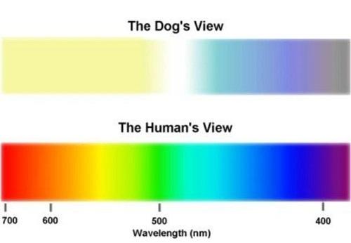 perros no ven en blanco y negro