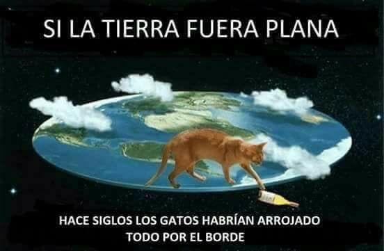tierra plana gatos